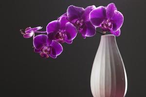 Purple flowers in a cream vase.